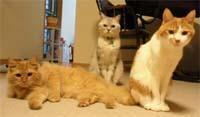 Dozeu-cats