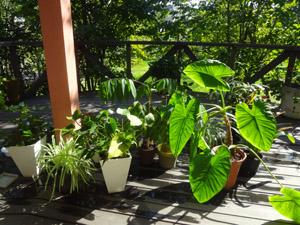 観葉植物栄養
