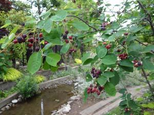 Junberry2
