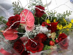 Maisa花