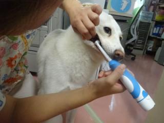 シロ歯ブラシ2